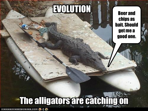 EVOLUTION The alligators are catching on Beer and chips as bait. Should get me a good one.