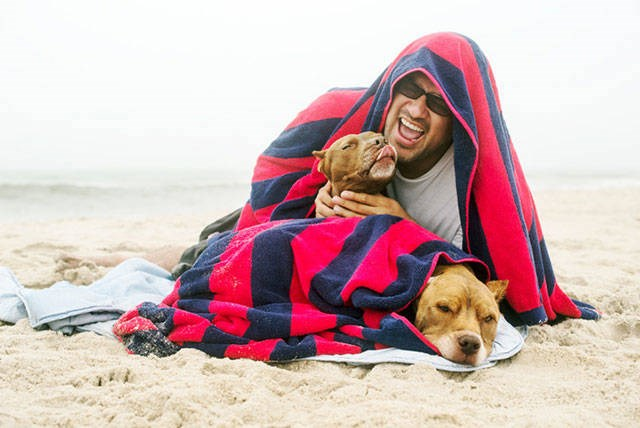 dogs gifts the dodo cute beach sad story pit bull story - 5477893