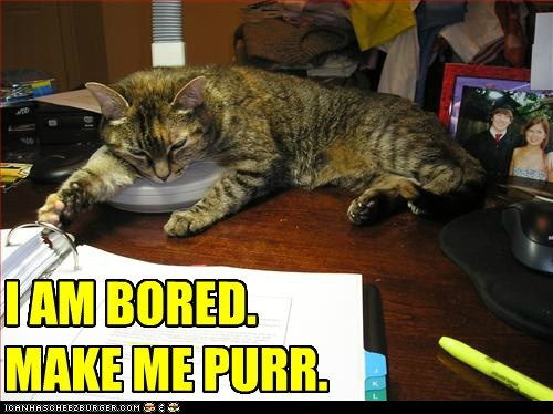 I AM BORED. MAKE ME PURR.