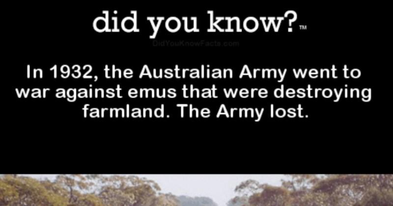 fun facts about animals that will make you smart like tarzan
