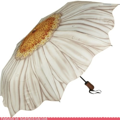 daisy Flower print rain umbrella - 5478961920