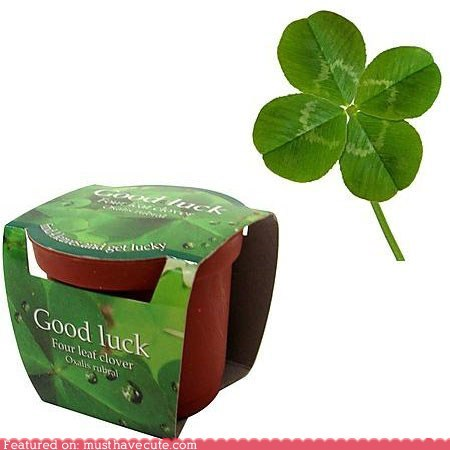 clover four-leaf clover luck plant