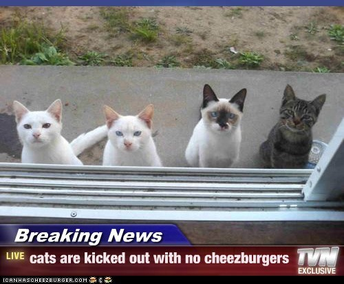 Cheezburger Image 5479288832
