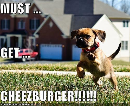Cheezburger Image 5479405056