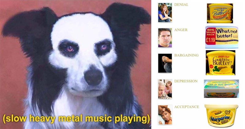Funny shitposts, heavy metal, dogs, dog memes, life, teachers, disney, dank memes, funny memes, random memes.
