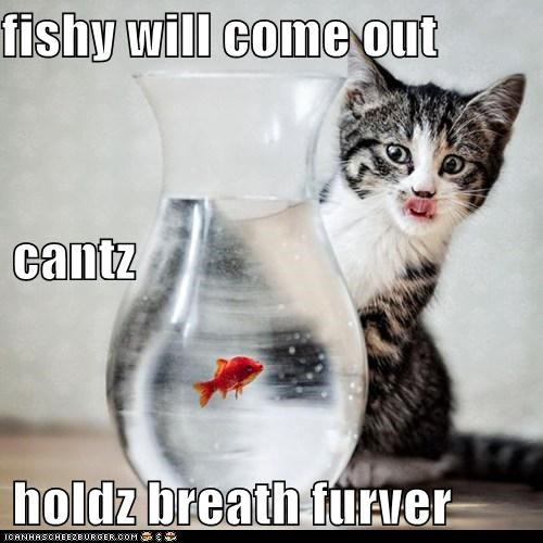 cat,fish,hungry,hunt,hunting,I Can Has Cheezburger,patiently waiting,waiting
