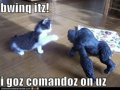 Cheezburger Image 5480301056