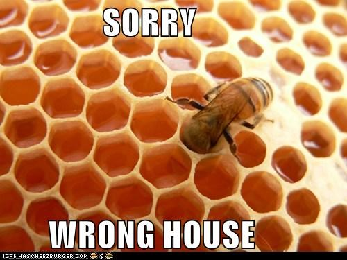 bee caption captioned honeycomb house sorry wrong - 5480435456