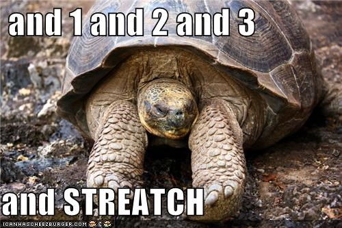 animals stretch stretching tortoise turtle yoga