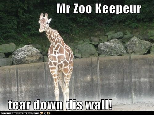 berlin wall,freedom,giraffes,justice,tear down this wall,zoo,zookeeper