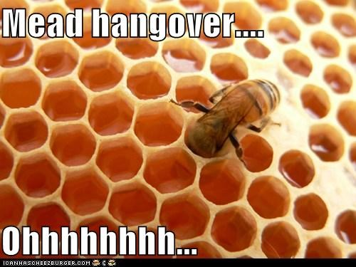 alcohol,bee,drunk,hangover,honeycomb,mead,mead hangover