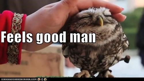 animals awesome feels good Feels Good Man happy owl Owl - 5481244160