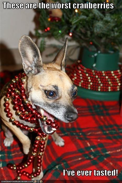 bead garland blah chihuahua cranberries gross icky yuck - 5481273344