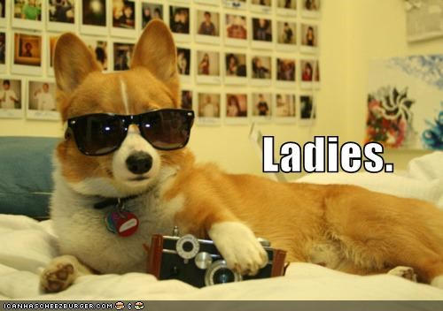 animals,bros,camera,dogs,g rated,ladies,sunglasses