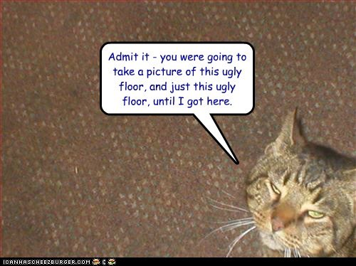admit boring caption captioned cat floor going just picture take that ugly were you