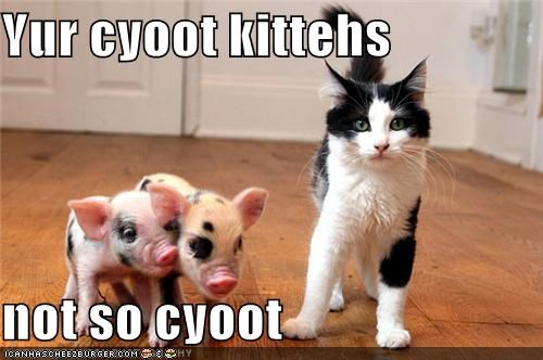 Yur cyoot kittehs not so cyoot