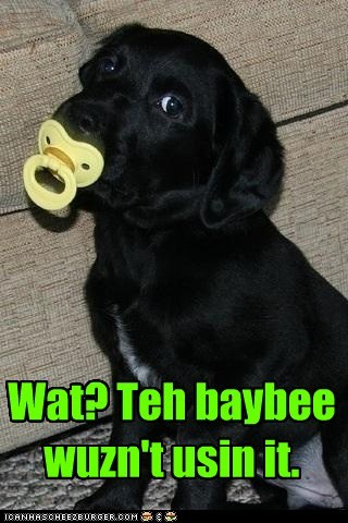 baby binky Black Lab labrador retriever pacifier puppy - 5484217600