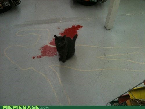 black cat cute IRL murder outline - 5484400384