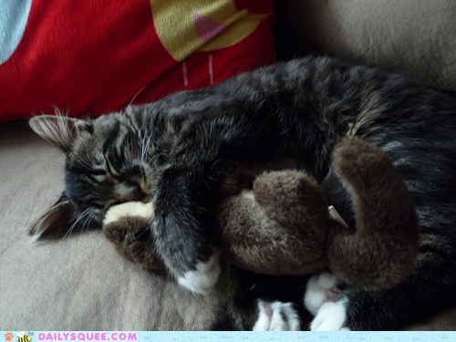 asleep cat cuddling friend reader squees sleeping stuffed animal toy - 5484707584