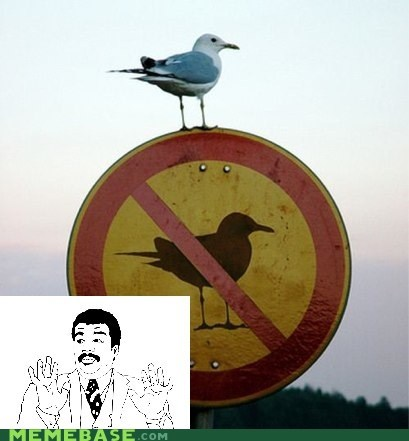 Badass,bird,defiance,oldsauce,Rage Comics,sign