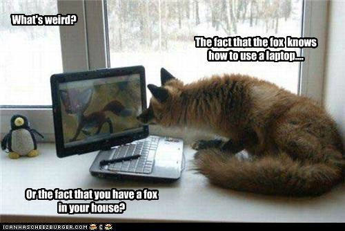 What's weird? The fact that the fox knows how to use a laptop.... Or the fact that you have a fox in your house?