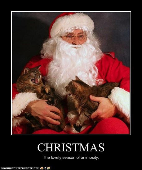 angry animosity caption captioned cat Cats christmas hostile lovely season - 5485067776