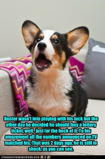 Buster wasn't into playing with his luck but the other day he decided he should buy a lottery ticket, well, just for the heck of it. To his amazement all the numbers announced on TV matched his. That was 2 days ago, he is still in shock, as you can see.