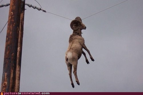 best of week caught goat Like a Boss telephone wtf - 5487014912