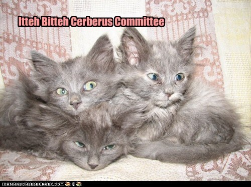caption captioned cat Cats cerberus itteh bitteh kitteh committeh kitten three - 5487266048