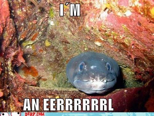 derp,eel,herp