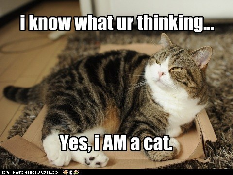 i know what ur thinking... Yes, i AM a cat.