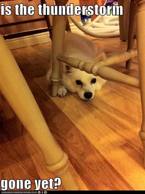 gone hide hiding scared thunderstorm whatbreed - 5488497408