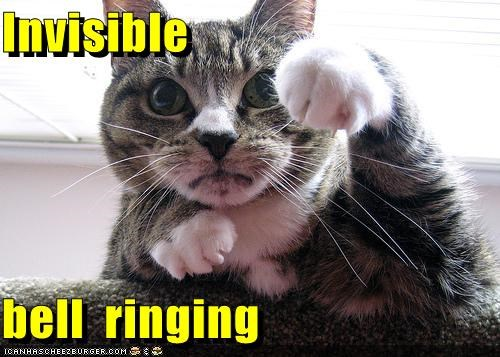 bell caption captioned cat holding invisible ring ringing - 5488941312