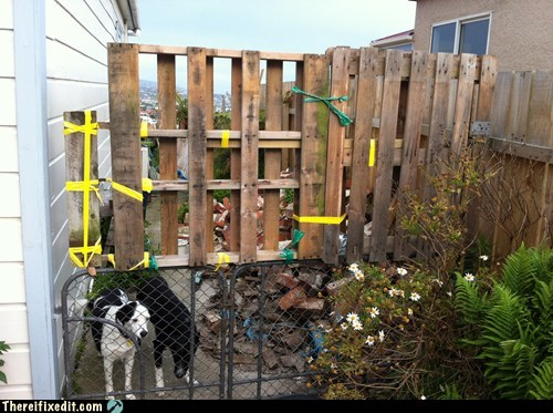 animals,dogs,dual use,fence,pallet