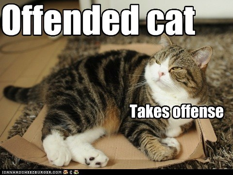 Offended cat Takes offense