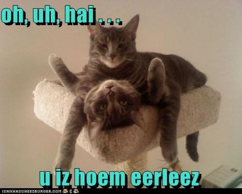 Cheezburger Image 5489272064