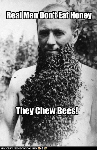 bees funny Photo wtf - 5489689344