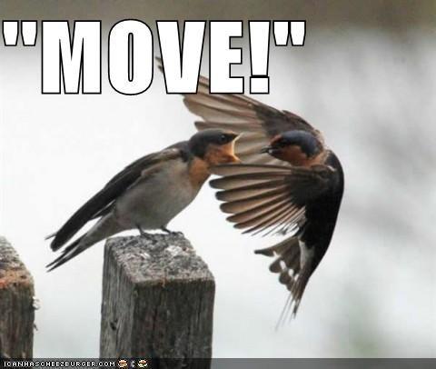 """''MOVE!"""""""