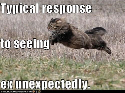 caption captioned cat do not want fleeing response running seeing - 5490145024