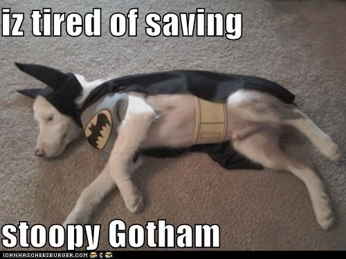 iz tired of saving stoopy Gotham