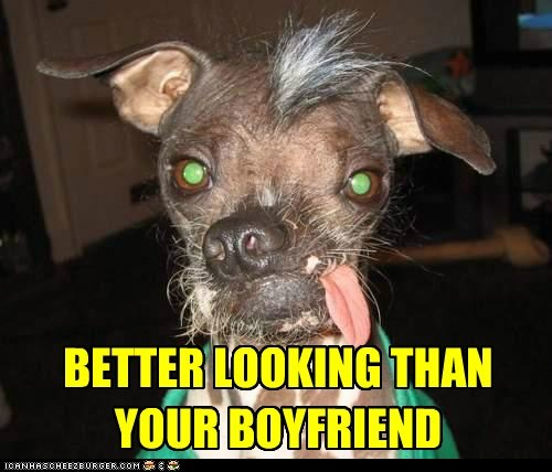 best of the week chinese crested good looking Hall of Fame handsome i has a hotdog - 5490547456