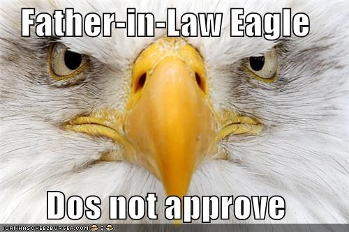 angry animals bald eagle birds does not approve eagle father in law mad - 5490803712