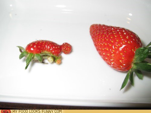 Deformed runt strawberry turtle - 5491023104