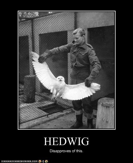 animal,demotivational,funny,historic lols,Owl,Photo