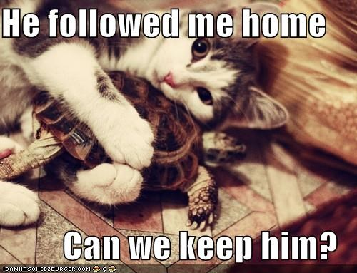 animals,cat,friends,friendship,I Can Has Cheezburger,love,pet,turtle
