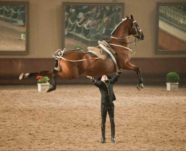 right moment photos amazing animals - 5491717