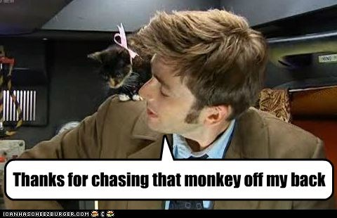 Cats,chasing,David Tennant,doctor who,monkey on your back,the doctor