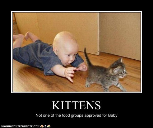 KITTENS Not one of the food groups approved for Baby