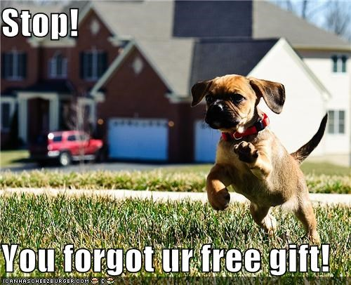 free gift,gift,grass,present,puppy,running,stop,whatbreed