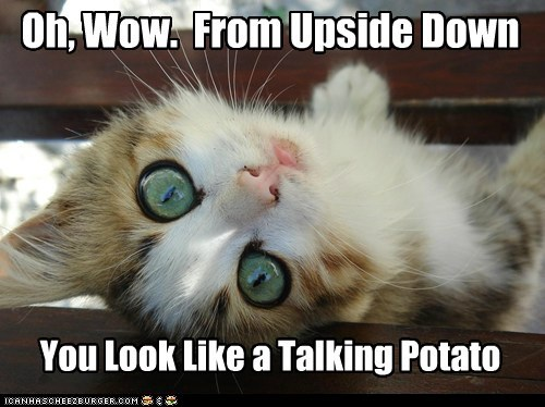 caption captioned cat from kitten look looking perspective potato resemblance resemble Staring talking upside down you